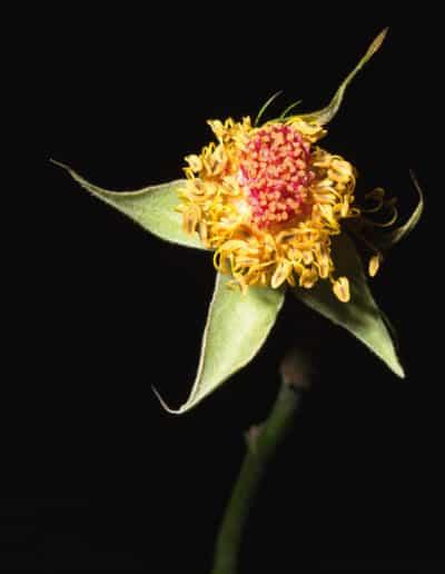 Blumenportrait Rina